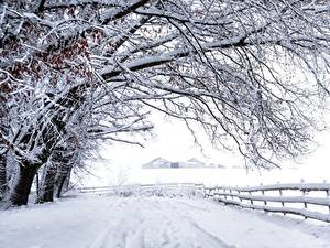 Hintergrundbilder Schnee Ast Bäume Zaun Natur