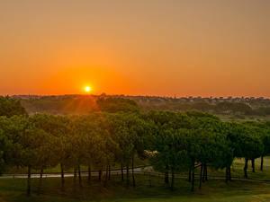 Bilder Spanien Sonnenaufgänge und Sonnenuntergänge Sonne Bäume Rompido Andalusia Natur