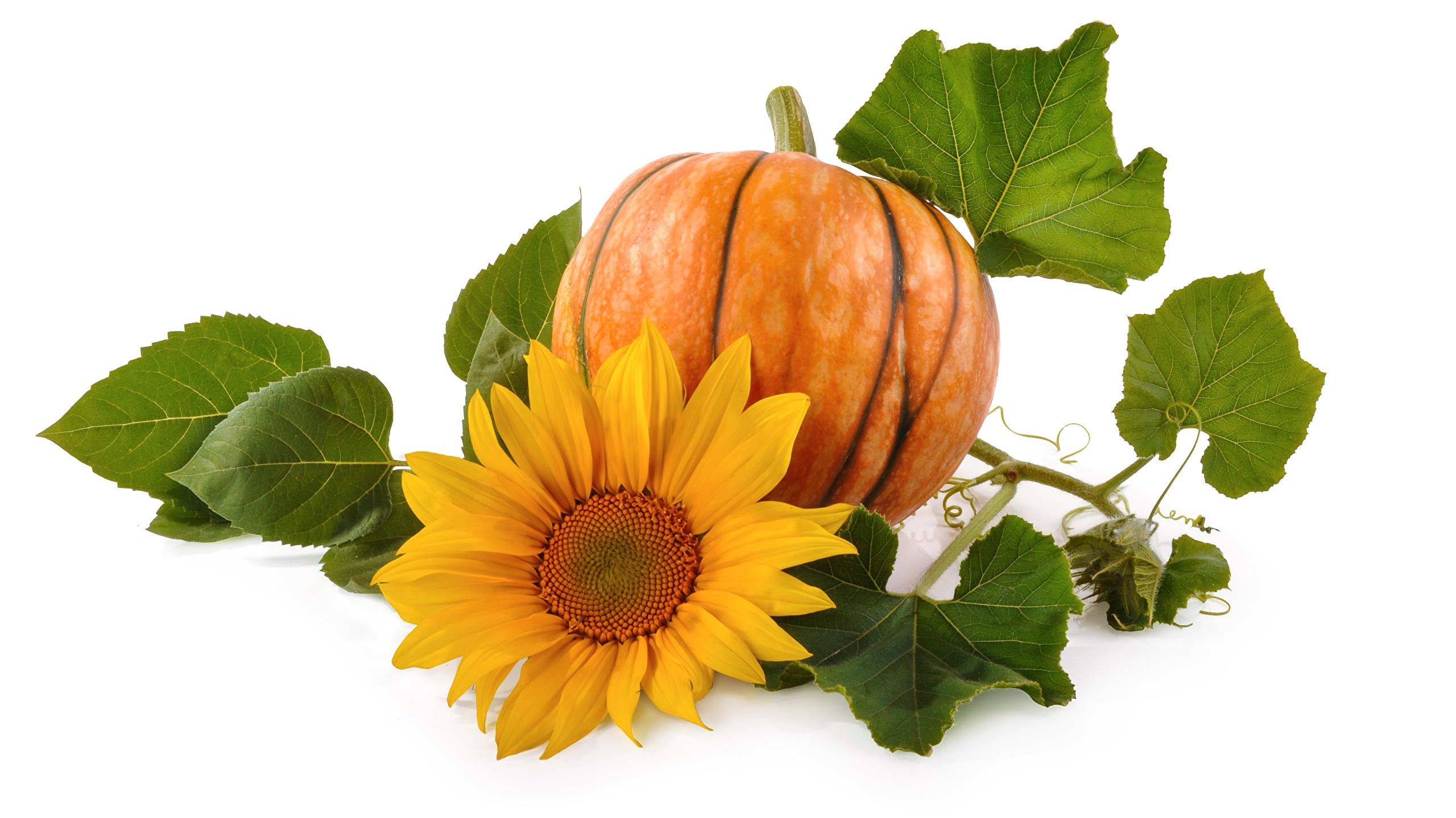 Desktop Wallpapers Foliage Pumpkin Sunflowers Food Closeup