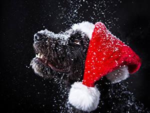 Hintergrundbilder Neujahr Hunde Schwarzer Hintergrund Schnauze Schnee Mütze Tiere