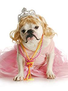 Bilder Hunde Schmuck Krone Weißer hintergrund Bulldogge Lustige Kleid Tiere