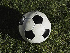 Fotos Fußball Ball Gras sportliches