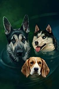 Fotos Gezeichnet Hunde Wasser Shepherd Siberian Husky Beagle Drei 3 Kopf