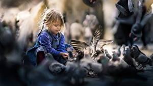 Fotos Feldtauben Kleine Mädchen Sitzend Kinder