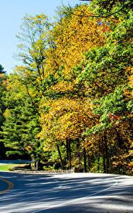 Hintergrundbilder Vereinigte Staaten Park Herbst Wälder Wege Vogel State Park Natur