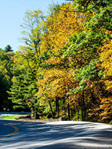 Photo USA Parks Autumn Forests Roads Vogel State Park Nature