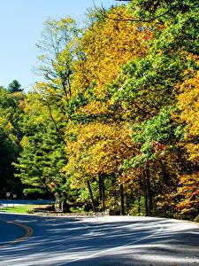 Hintergrundbilder Vereinigte Staaten Park Herbst Wälder Wege Vogel State Park