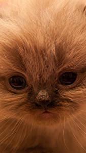 Fotos Katze Augen Katzenjunges Schnauze