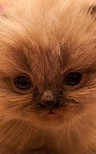 Fotos Katze Augen Katzenjunges Schnauze ein Tier