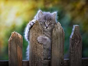 Hintergrundbilder Hauskatze Graue Zaun Pfote Blick Tiere