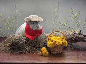 Bilder Löwenzahn Hausmeerschweinchen Weidenkorb Ast Der Hut Tiere