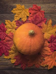 Fotos Herbst Kürbisse Blattwerk Natur