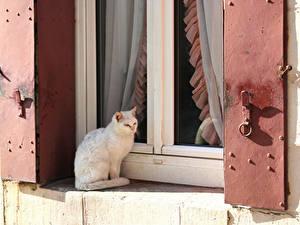 Hintergrundbilder Katze Fenster Sitzend Tiere