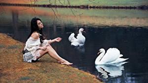 Hintergrundbilder Schwäne Teich Sitzend Mädchens Tiere
