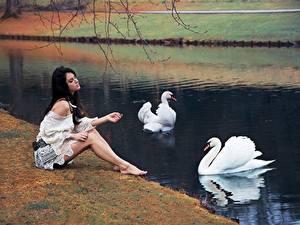 Hintergrundbilder Schwäne Teich Sitzt junge Frauen Tiere