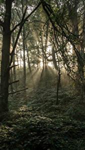 Fotos Vereinigtes Königreich Wald Bäume Lichtstrahl Stonecliffe Woods Natur