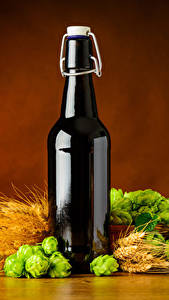 Bilder Bier Echter Hopfen Farbigen hintergrund Flasche Ähre Lebensmittel