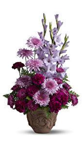 Fotos Sträuße Chrysanthemen Nelken Schwertblume Weißer hintergrund Vase Blüte