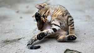 Bilder Katzen Kätzchen Pfote