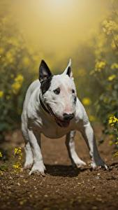 Pictures Dogs Rapeseed Bull Terrier animal