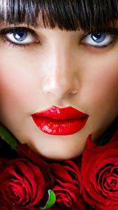 Fotos Rosen Lippe Braunhaarige Gesicht Schminke Nase junge Frauen