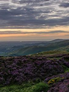 Bilder Vereinigtes Königreich Landschaftsfotografie Abend Himmel Grünland Hügel Wolke North Wales