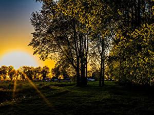 Fotos Sonnenaufgänge und Sonnenuntergänge Bäume Gras Lichtstrahl Sonne