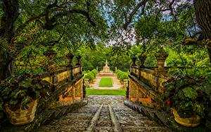 Bilder USA Park Springbrunnen Florida Miami Ast Strauch Stiege Natur
