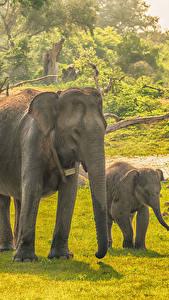 Fondos de Pantalla Sri Lanka Parque Elefantes Cachorros Dos Hierba Yala National Park Animalia