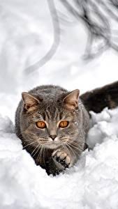 Hintergrundbilder Hauskatze Schnee Graues Tiere