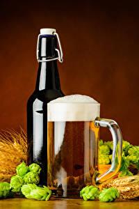 Fotos Getränke Bier Echter Hopfen Becher Flasche Schaum Ähre Lebensmittel