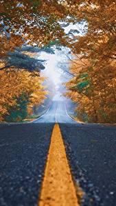 Bilder Straße Herbst Asphalt Bäume Strips
