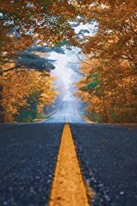 Wallpapers Roads Autumn Asphalt Trees Stripes Nature