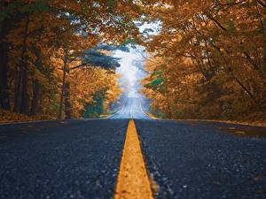 Wallpapers Roads Autumn Asphalt Trees Stripes Nature