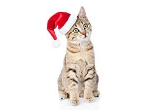 Bilder Katze Neujahr Mütze Sitzend Weißer hintergrund Starren Tiere