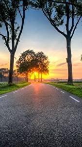 Bilder Sonnenaufgänge und Sonnenuntergänge Wege Gras Bäume Asphalt Natur