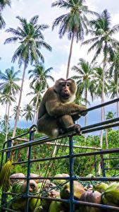 Bilder Tropen Affe Palmengewächse Zaun Tiere