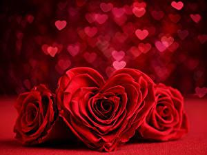 Papéis de parede Dia dos Namorados Rosas Três 3 Vermelho Coração Flores