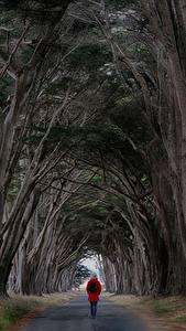 Hintergrundbilder Straße Bäume Wanderung Natur