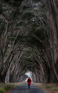 Hintergrundbilder Straße Bäume Wanderung