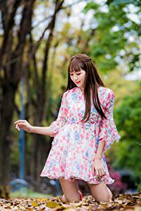Desktop hintergrundbilder Asiatische Herbst Braune Haare Kleid Blatt Unscharfer Hintergrund Mädchens