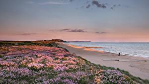 Fotos England Küste Morgendämmerung und Sonnenuntergang Strände Southbourne Beach Natur