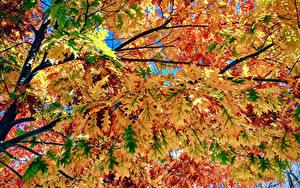 Hintergrundbilder Herbst Hautnah Ast Blatt