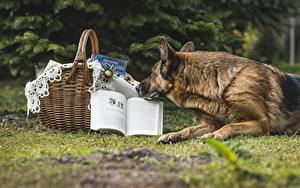 Fotos Hunde Shepherd Weidenkorb Buch