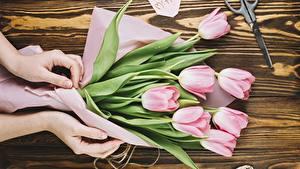 Hintergrundbilder Tulpen Hand Blumen