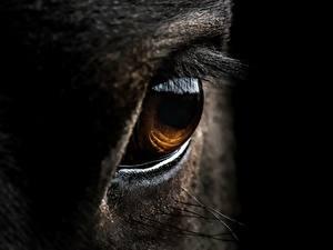 Wallpaper Closeup Eyes Horses
