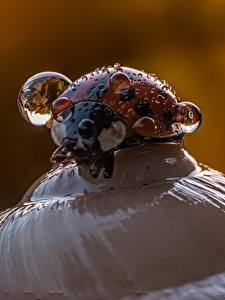 Fotos Hautnah Marienkäfer Tropfen ein Tier