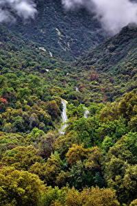 Hintergrundbilder USA Park Wälder Kalifornien Sequoia National Park