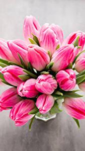 Hintergrundbilder Blumensträuße Tulpen Großansicht Rosa Farbe Blumen