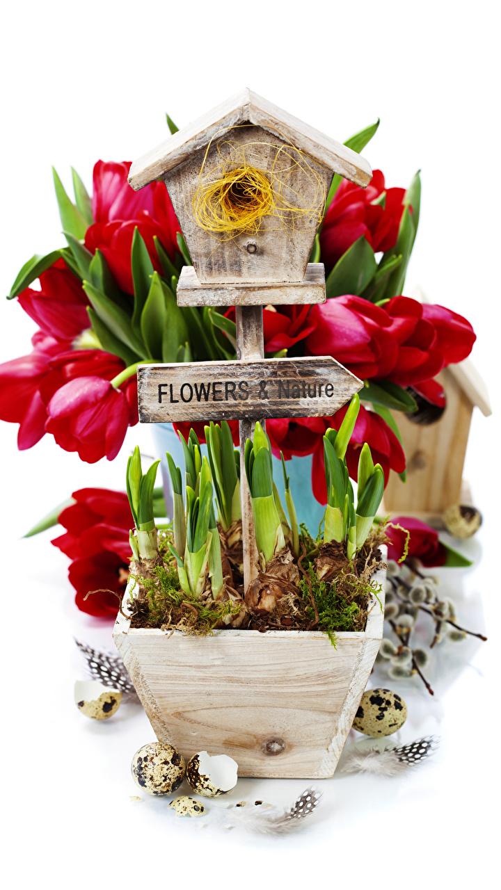 Bilder Ei Nest Tulpen Blumen Federn Weißer hintergrund 720x1280